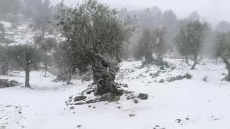 Als der Schnne kam: Weiße Pracht auf Mallorca, 17. Januar 2017