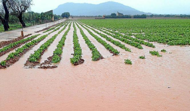 Große Teile der Kartoffelfelder in Sa Pobla auf Mallorca sind von Wasser bedeckt.