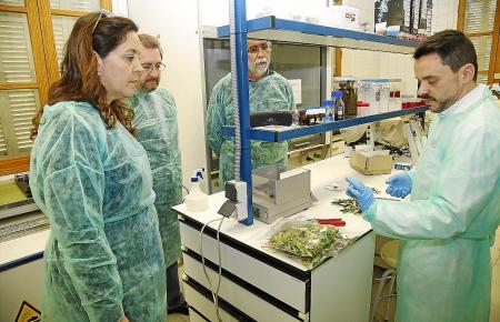 """Techniker des Agrarinstitutes CSIC und Politiker koordinieren die Maßnahmen gegen """"Xylella""""."""