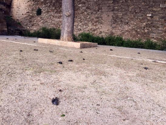 250 tote Vögel lagen auf der Dalt Murada