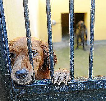 3000 Hunde und Katzen kamen im vergangenen Jahr ins Tierheim Son Reus