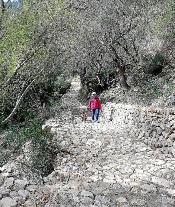 Auf Trockenmauerwegen und durch den Wald geht es hinauf nach Biniarroi.