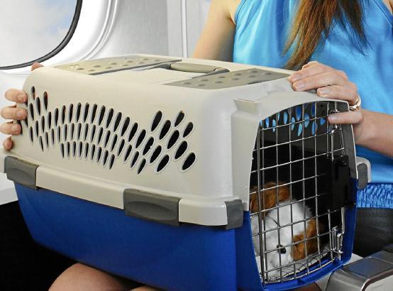 Für Reisen zwischen Deutschland und Spanien müssen die Tiere eine gültige Tollwutimpfung haben. Auch dabei gilt es besondere Fri