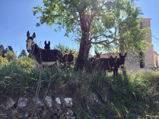 Esel werden erfolgreich zur nachhaltigen Forstwirtschaft eingesetzt.