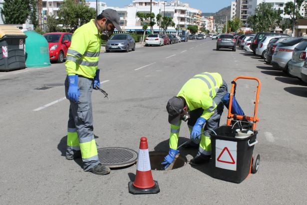 Mitarbeiter der Stadt Palma bekämpfen Schädlinge auf Ibiza