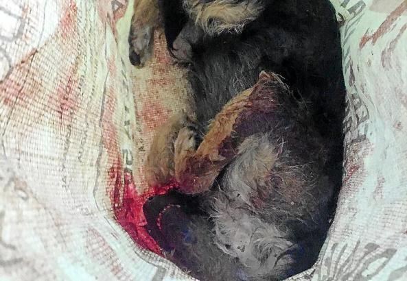 Der tote Hund wurde einem Sack für Baumaterial entsorgt