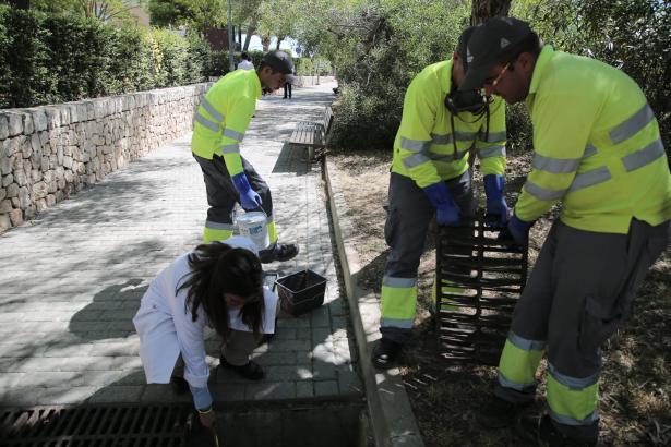 Die Stadt Palma investiert 55.000 Euro in die Präventionskampage