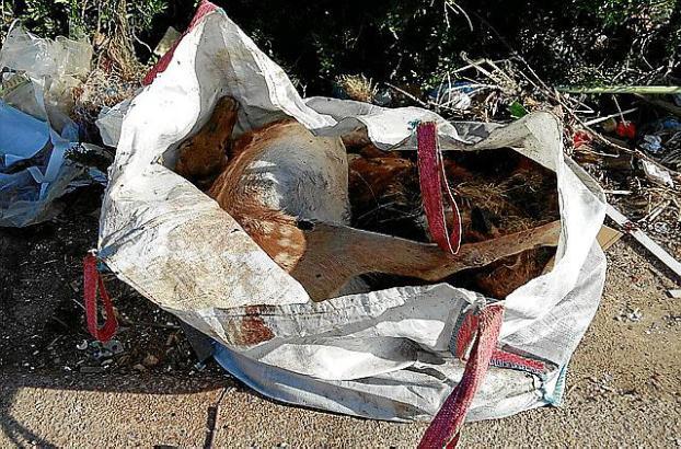 Die toten Hirsche wurden bei Inca in der Inselmitte Mallorcas gefunden.