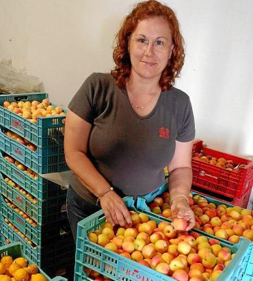 PORRERES - La Cooperativa de Porreres ha empezado la temporada de los albaricoques