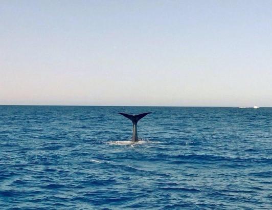 Die Organisation Tursiops studiert vor allem die Sprache der Wale
