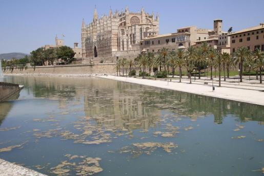 An der Wasseroberfläche des Teichs am Parc de la Mar sammeln sich Algen an der Wasseroberfläche