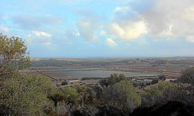 Auf der Finca von Santa Cirga bei Manacor könnte ein Solarpark entstehen. Das Projekt ist umstritten. Das neue Gesetz soll Aspek