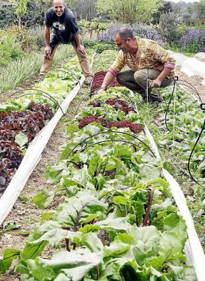 Die biologisch bewirtschaftete Fläche auf der Insel ist in den vergangenen zehn Jahren um 60 Prozent gewachsen.