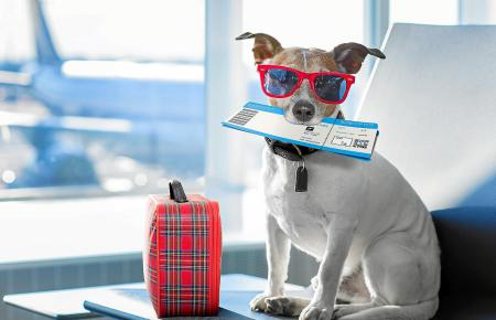 """Ein """"Flughund"""": Auch Vierbeiner sollen mit in den Urlaub nach Mallorca reisen können.dog in airport terminal on vacation"""