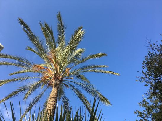 Blauer Himmel über Palmen. So sollen sich den Prognosen zufolge die ersten Novembertage präsentieren.