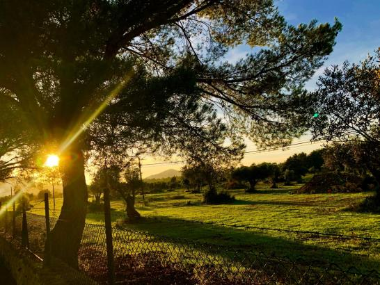 Den Goldenen Herbst in Port Vell fotografierte MM-Leser Kai H. Leitz.