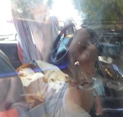 Anwohner auf Mallorca fotografierten den Hund auf dem Fahrersitz.
