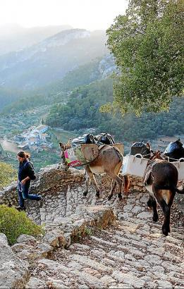 Esel im Einsatz beim Abstieg in Richtung Alaró.