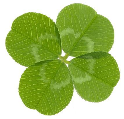Das vierblättrige Kleeblatt gilt als Glückssymbol.