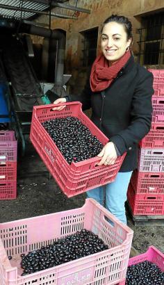 """Agrartechnikerin Marga Morey von der Kooperative in Sóller zeigt die kürzlich abgeernteten Oliven. """"Wegen des vielen Windes war"""