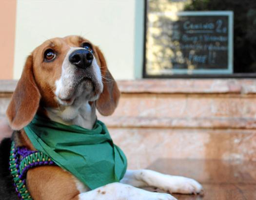 Nur in einzelnen Restaurants auf Mallorca sind Hunde gestattet, doch einige davon servieren sogar ein besonderes Menü für die Vi