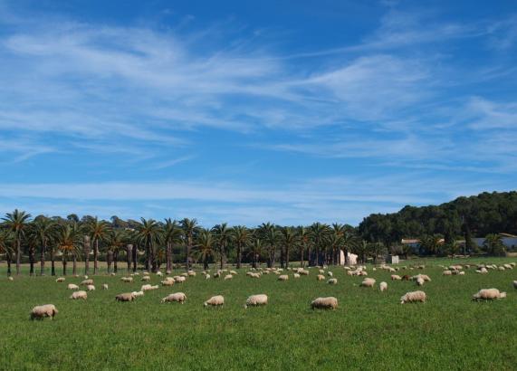 """Auch die """"Osterlämmchen"""" dürfen sich über schönes Wetter auf der Insel freuen."""