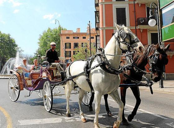 In Palma sind immer noch zahlreiche Pferdekutschen unterwegs.