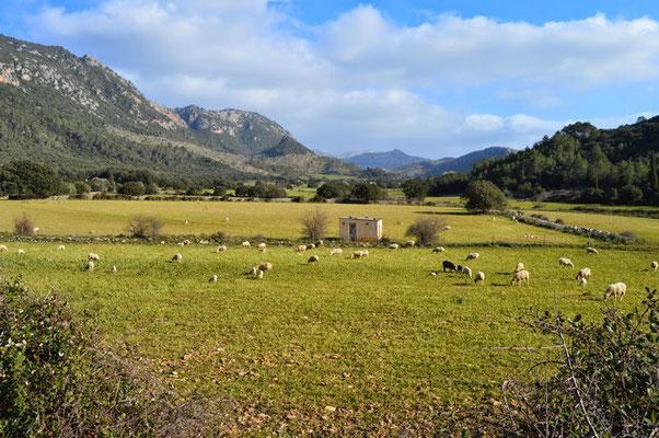 Heitere Stimmung im Tal von Orient auf Mallorca.