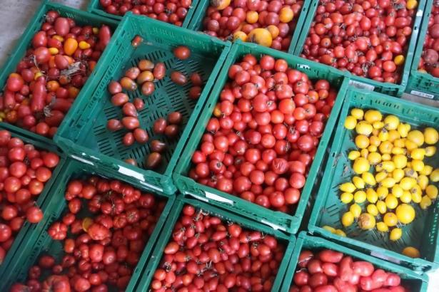 """Schmackhaft und faszinierend: die """"Ramellet""""-Tomate."""