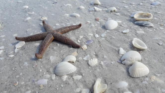 Strand und Sonne: Ist das der Alltag für Auswanderer?