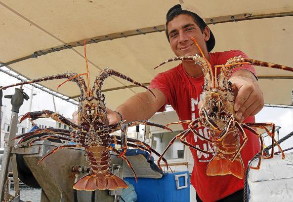 Die Urlaubssaison sorgt bei den Langustenfischern für Hochkonjunktur.