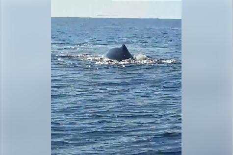 Fischer haben vor Cala Bola im Osten von Mallorca Wale entdeckt.