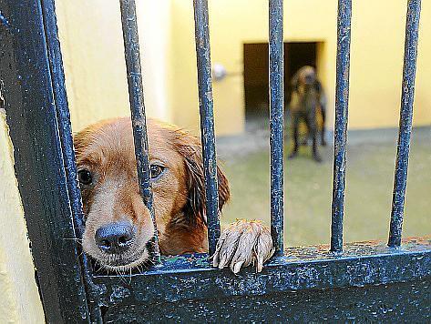 Positive Signale: In der Auffangstation des Tierheims von Palma müssen immer weniger Tiere eingeschläfert werden.
