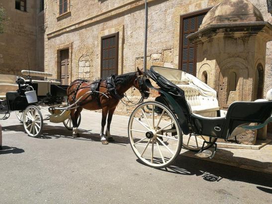 Müssen im Sommer bei großer Hitze stehenbleiben: die Pferdekutschen in Palma.