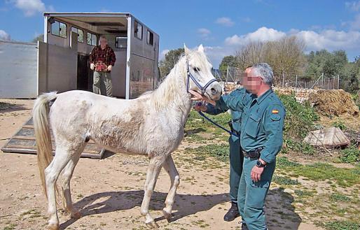 Seit 2016 wurden zum Beispiel 30 Pferde zumindest vorübergehend betreut.