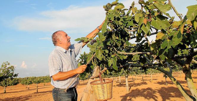 Das Mustergut von Monserrat Pons umfasst 1700 Bäume auf 18 Hektar Fläche.