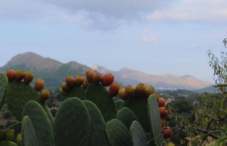 Der August auf Mallorca war warm aber regnerisch.
