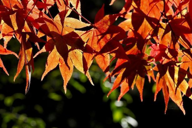 Goldener Herbst auf Mallorca.