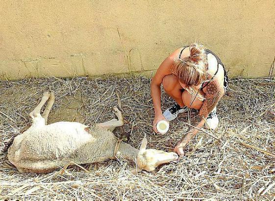 Tierschützerin bei Andratx auf Mallorca.