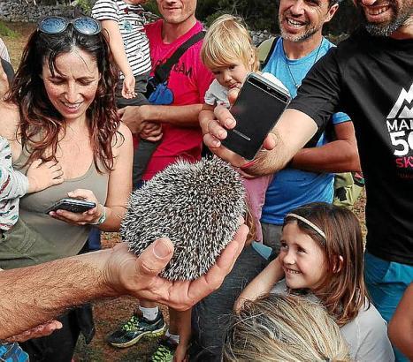 Bei der Auswilderungsaktion im Naturpark Mondragó wurden Igel, Eulen und die dort zuvor beheimatete Mittelmeerschildkröte ausges