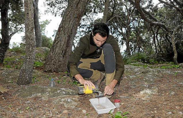 Ein Biologe präpariert eine Falle für die Hornissen.
