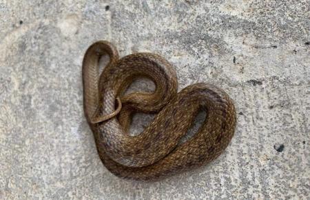 Diese Schlange versetzte die Anwohner in Angst und Schrecken.