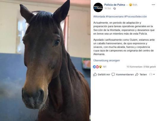 """Palmas Polizei ehrt Hannoveraner-Pferd 'Guiem"""" mit einem Facebook-Eintrag."""