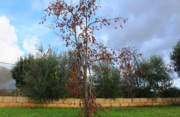 Herbst auf Mallorca.