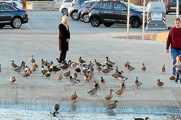 Die große Entenpopulation ist für Besucher eine Attraktion.