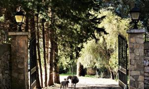 Ausflug der Schafe in der Tramuntana