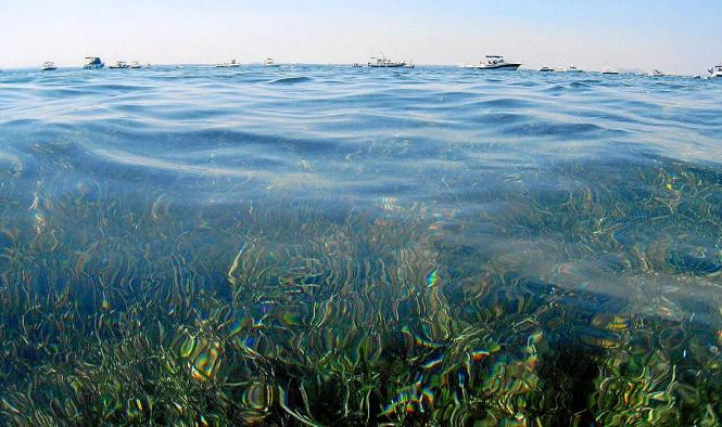 So schön und so bedroht: Posidonia vor Mallorca.