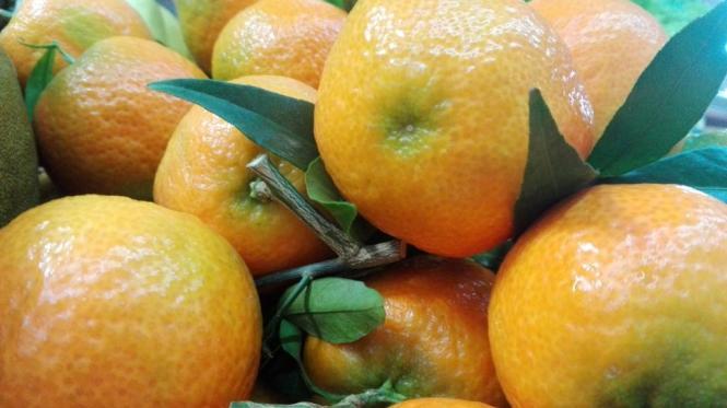 Clementinen boomen in diesem Jahr.
