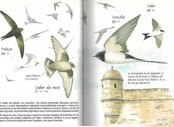 So sieht er aus, der Leitfaden zum Thema Stadtvögel.