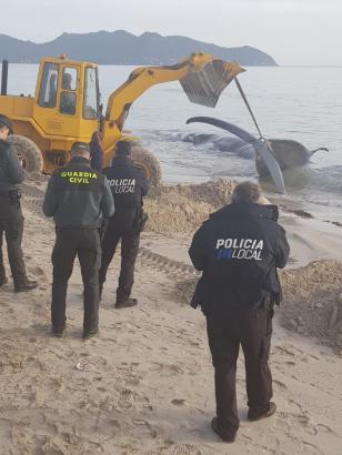Toter Wal auf Mallorca.